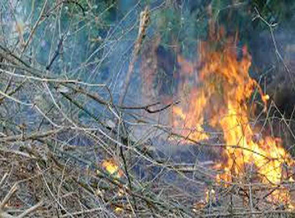 Fores Fire Sumiklab Sa Isang Taniman Sa Bayan ng Labo, Matinding Init Ng Panahon Maaaring Isa Sa Mga Nagpalala Ng Sunog!